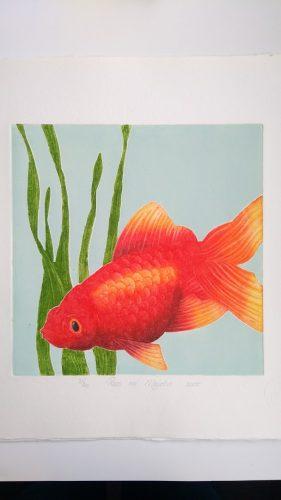 ets goudvis 1 Roos van der Meijden