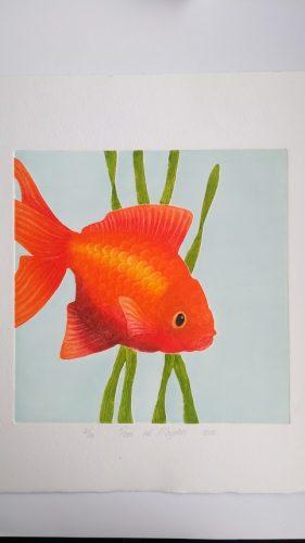 ets goudvis 2 Roos van der Meijden